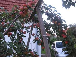 July 06 2008 Bijeljina 033