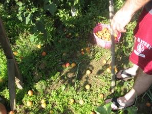 July 06 2008 Bijeljina 074